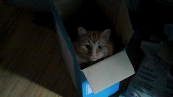 Moe in a box... a favourite cat hang out.