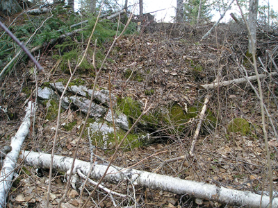 Fallen Birches and Rocks near the roots
