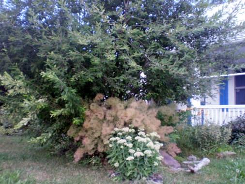 Cathi's Garden Aug 2013