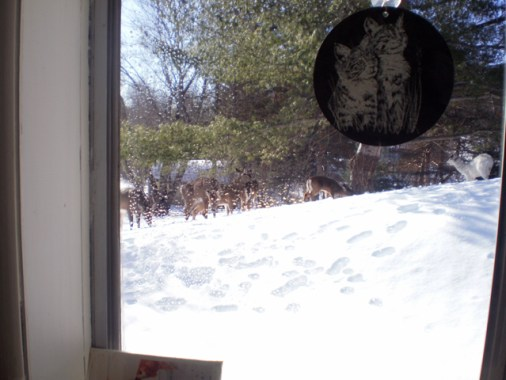 Several Deer on a hill in the snow.