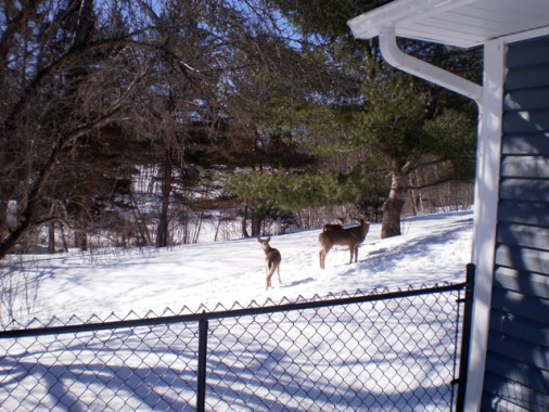 Deer near house.