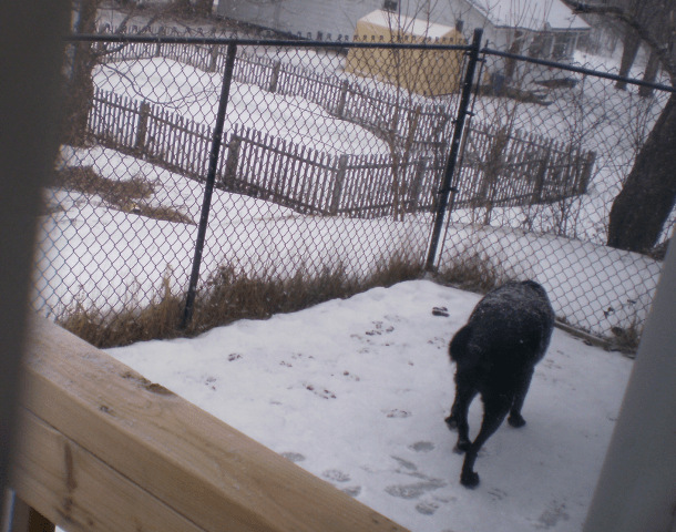Jassper in the snow of the dog run.