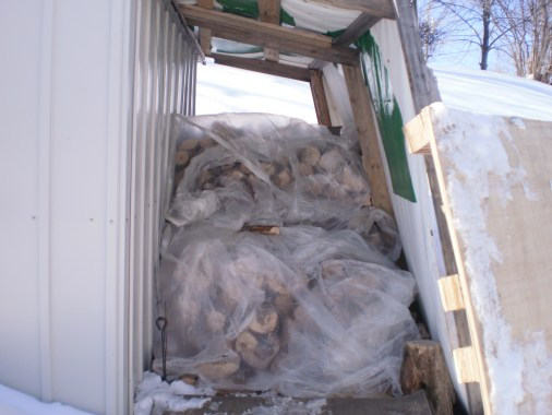Stacked firewood under plastic.