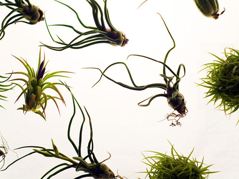 aerium-blog-introducere-in-lumea-plantelor2