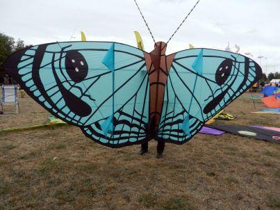 Ein schöner Schmetterling