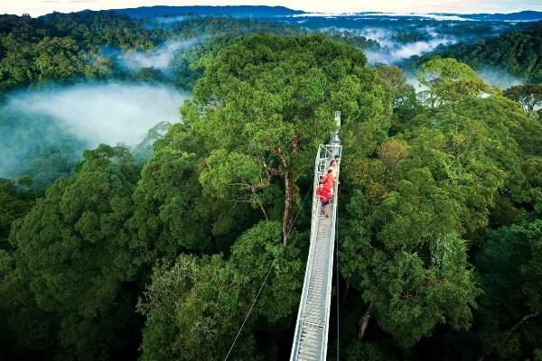 Ulu Temburong National Park Brunei