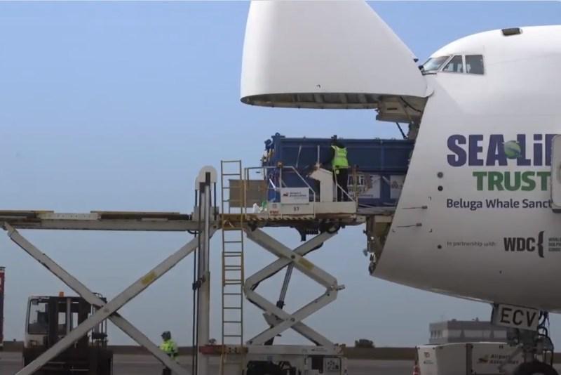 Cargolux 747 Transporte Baleia Beluga