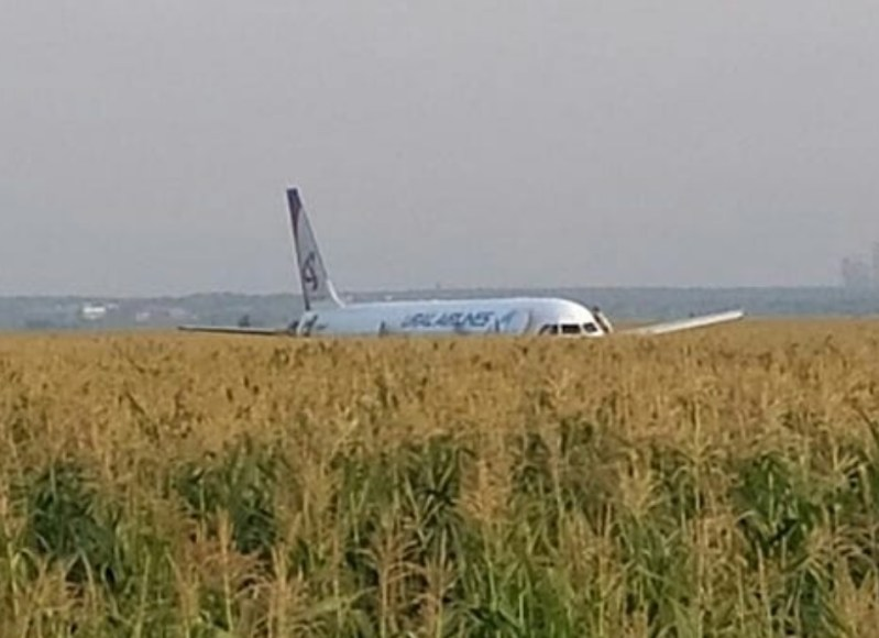 airplane emergency landing bird strike