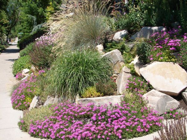 xeriscaping backyard landscape