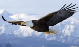 De l'oiseau à l'avion…