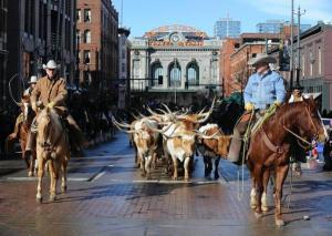 National Western Stock Show Cattle Drive