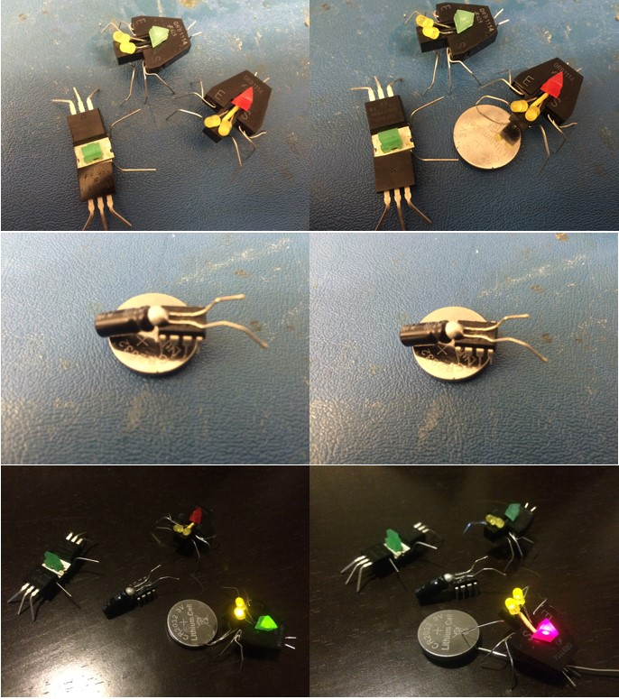 Figure 4; Spiders and firefly