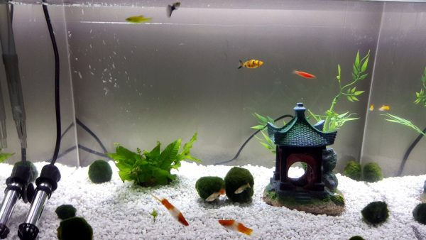 Upside Down Fish Tank – Jason Savath