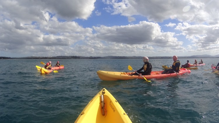 Spot Dolphins while Kayaking in Byron Bay