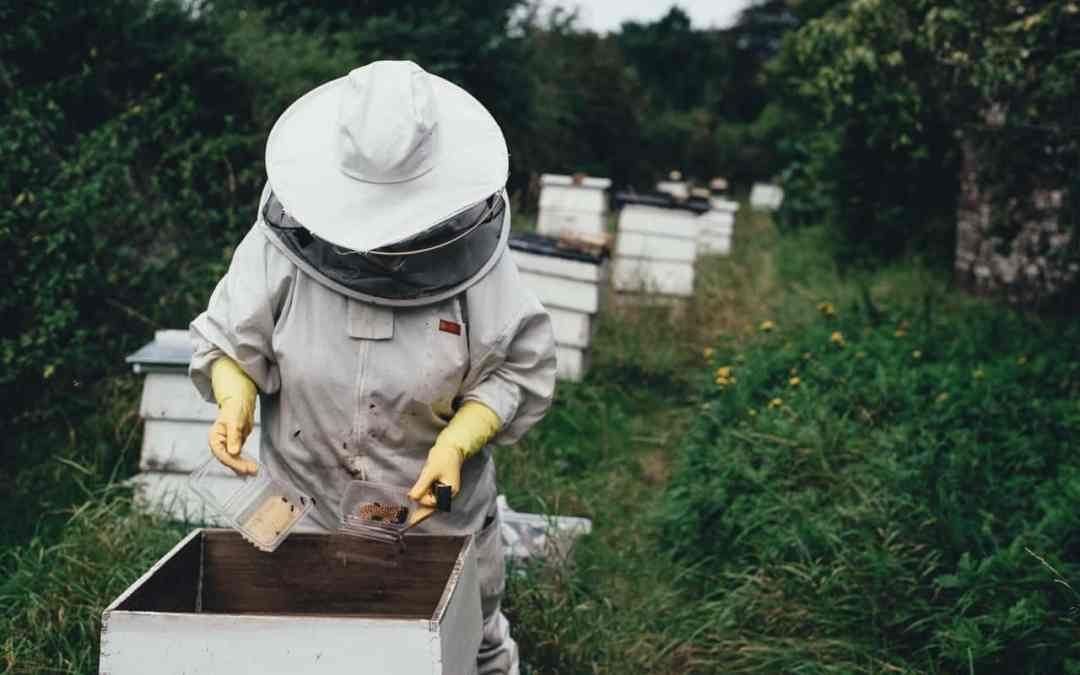 The Importance of Bees in Coquitlam