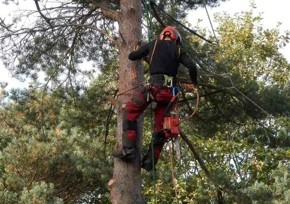 Why you need to hire a professional tree surgeon to get your tree trimmed?