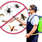 What you should consider when hiring a pest control expert