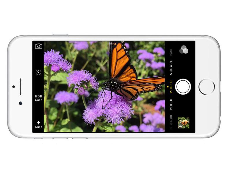 butterfly iphone6