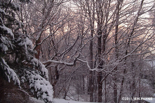 January Snow 2