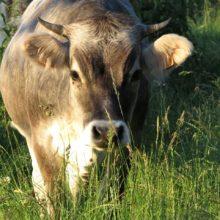 Sortie familiale à la ferme de Domaine du Geissberg!