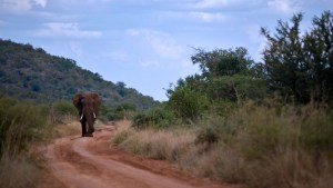 Contact   overview of safaris
