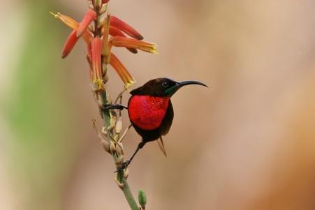 sun bird birding safari