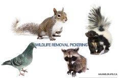 WILDLIFE REMOVAL PICKERING