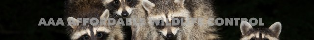 Raccoon Removal Toronto Reviews