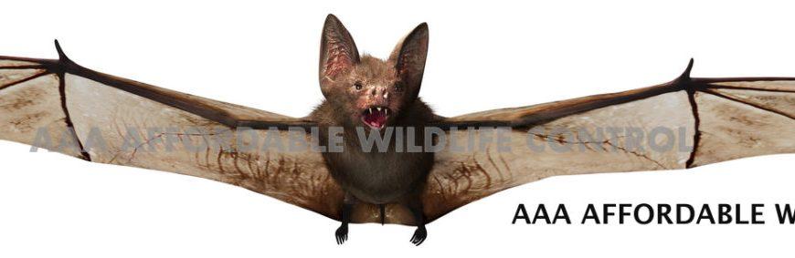 bat removal toronto - Bat Control Service
