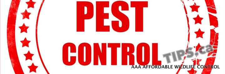 Wildlife Control -PEST CONTROL TIPS