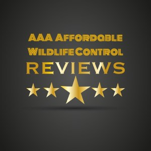 Wildlife Control Toronto Reviews - AAA Affordable Wildlife Control
