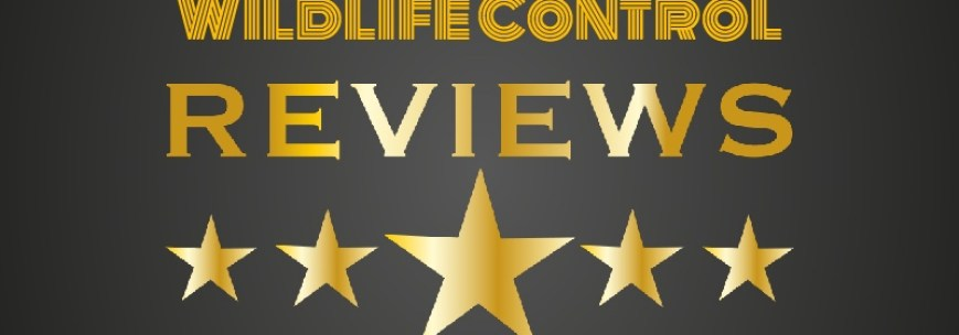Wildlife Control Toronto Reviews - Raccoon Removal Reviews, Squirrel Removal Toronto Reviews, AAA Affordable Wildlife Control Reviews