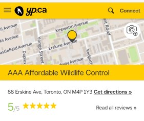 Wasps, wasp nest removal, wasp control, Wasp Nest Removal Toronto