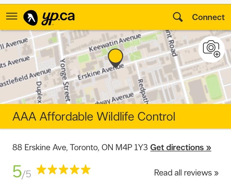 wildlife control toronto reviews, Affordable Wildlife Control