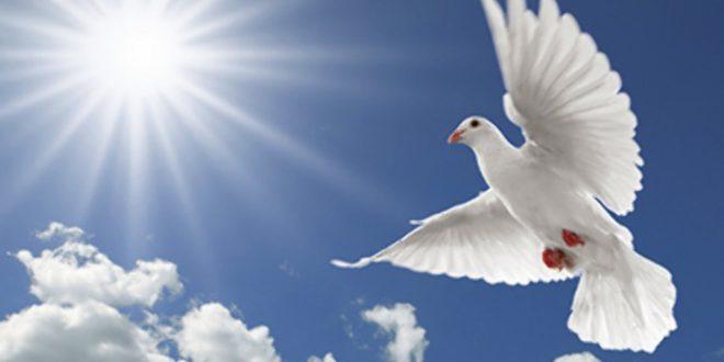 opinion the peace prospect