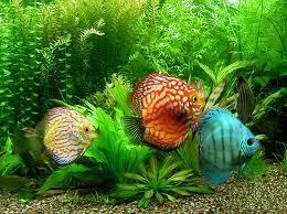 صناعة طعام سمك الزينة