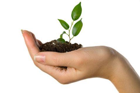 كيف تنمو الشركات الصغيرة والمتوسطة