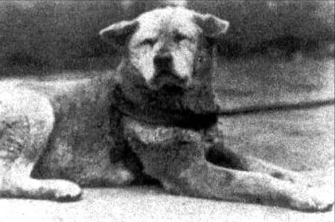 hachiko real picture