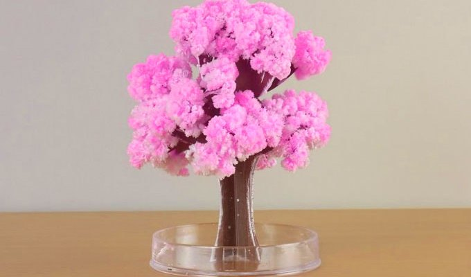 Magic sakura tree (desk-size!)
