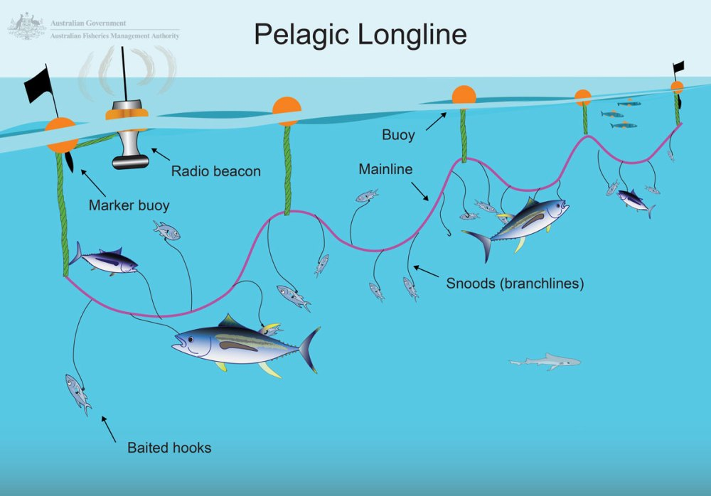 medium resolution of longlining australian fisheries management authority one line electrical diagram long line diagram