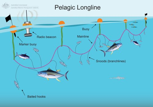small resolution of longlining australian fisheries management authority one line electrical diagram long line diagram