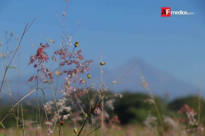 volcan arbol plantas 20 696x464 - Temperaturas superiores a 35ºC en estos días son causadas por anticiclón: Conagua
