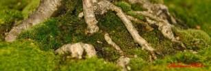 DSC_6845 dettaglio bonsai - afnews