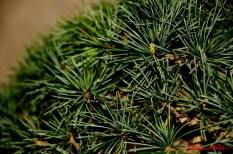 DSC_6851 dettaglio bonsai - afnews