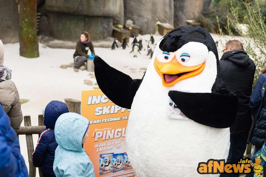 bioparco-zoom-torino-pinguini-madagascar-44