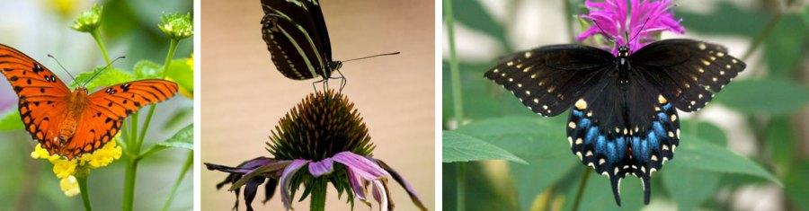 ButterfliesThumbs