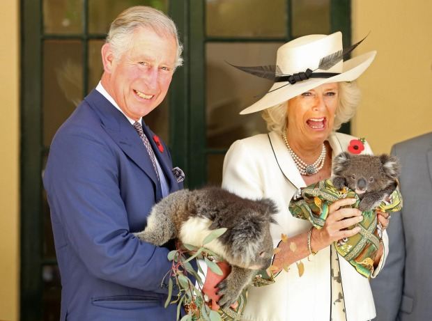 Charles, Prince of Wales, and The Duchess of Cornwall hold koalas in Adelaide on their visit to Australia in July 2015.