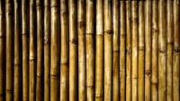 Breaking up the bamboo ceiling: Making Asian