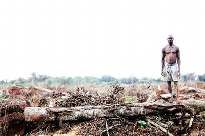 campo distrutto per palma da olio
