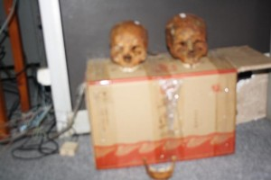 I due crani sequestrati